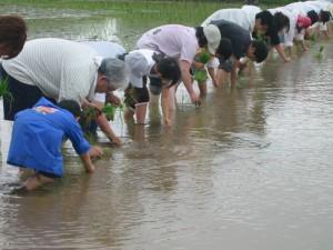 熊本県菊池市田植えヒノヒカリ